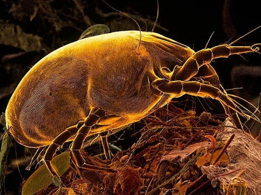 What is Mite?